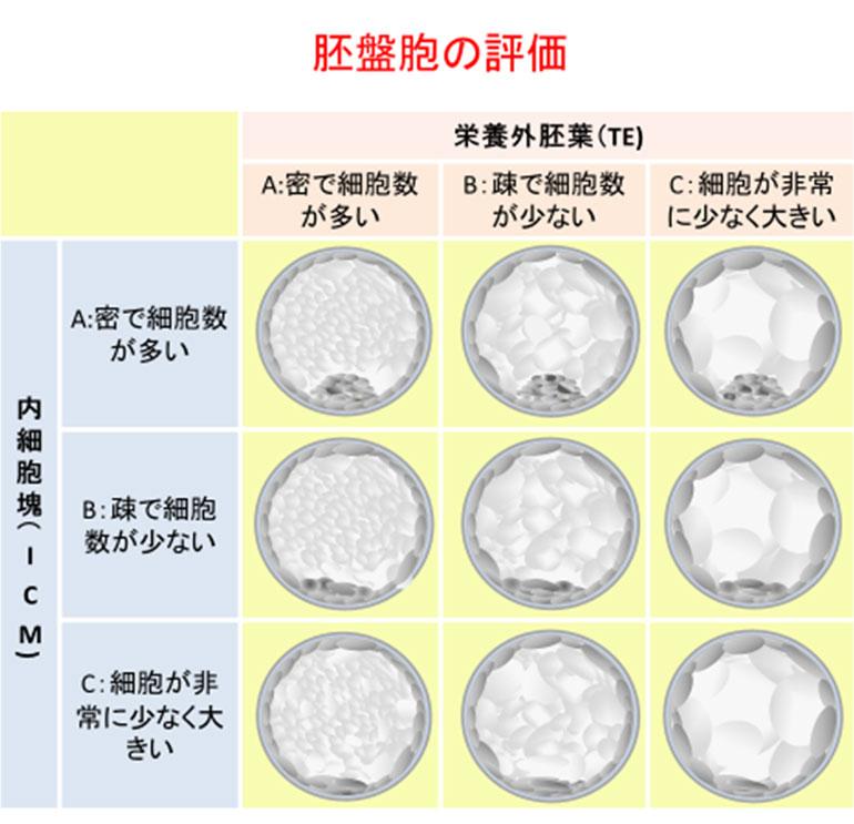 受精卵(胚・胚盤胞)のグレードについて|評価のポイントを解説 ...